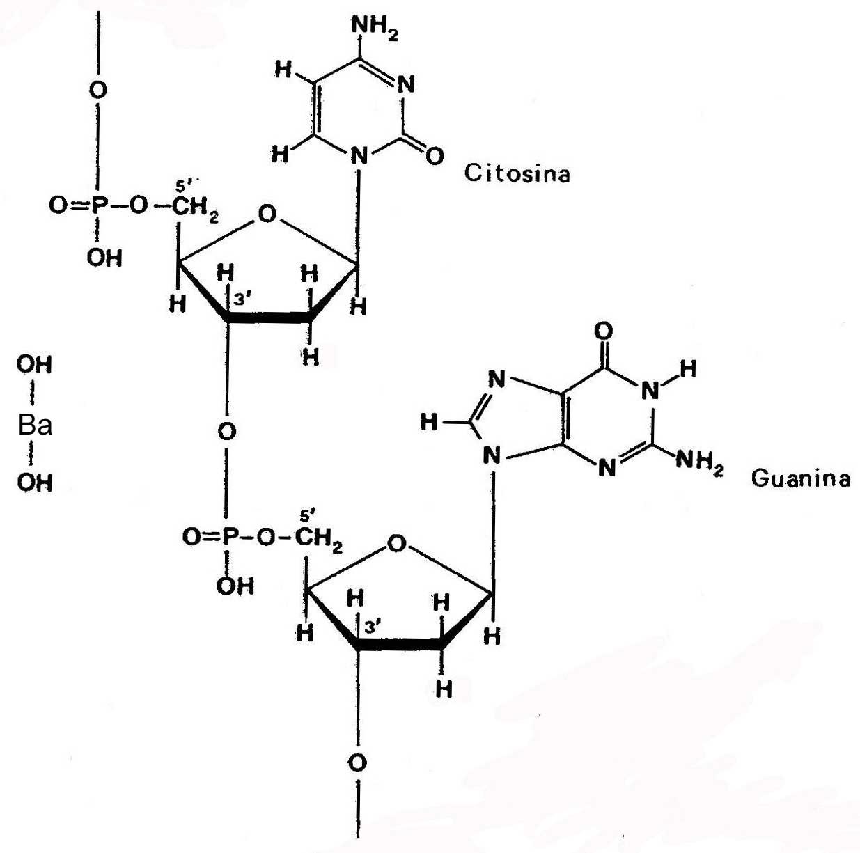 Catena%20DNA%20con%20idrossido.2.jpg